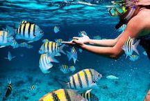 Snorkeling freediving ❤❤