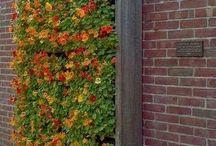 Vertikal garden / Grüne Wände