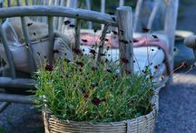 #darkredflowers