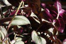 Plants I have / by Nancy Garner