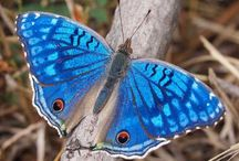 All God's Critters - Butterflies  2 / by Kay Hough