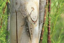 flora e fauna / flora e fauna insetti
