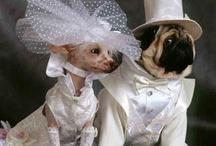 If I Was Marrying Bridget