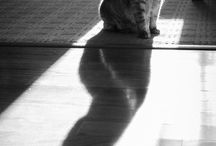 Cut love / Γάτες..!!!