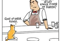 Cat Humor / by Lynne Atchison
