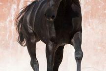 horses ^.^ / konie i konie i tak w nieskończoność :)
