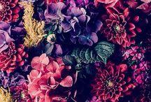>>**Flowers**<<