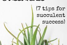 tips for sacuulants