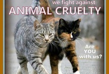 Beautiful creatures, ugly abuse