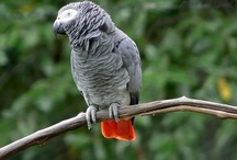 Parrots are my favorite animal