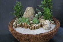 succulenten