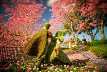 Epcot International Flowers / by Let Kids Play
