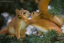 Animals / An animals eyes have the power to speak a great language! / by Pati's Pin House