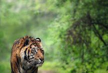 ♥ Wild Animals ♥