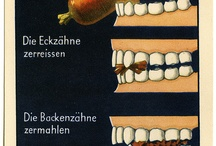 Schule_Zähne