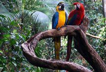 dyr i regnskoven