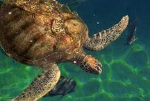 turtle lifecycle