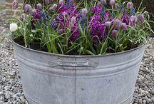 Zinc buckets etcetera