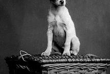 Vintage Dogs / Vintage dogs