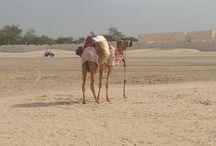 Luxury Arabia