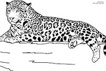 Raubkatzen vorlagen