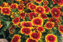 Blomster/ flowers