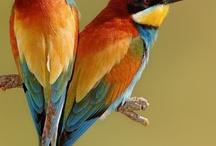 Birds / by Regina Granado Gomes