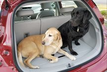 Pets in Cars by Edmunds