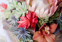 Patia Garden Love / All things flora / by Anya Fedorova
