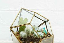 For the home / Plants