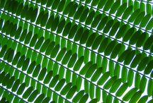 tramas verdes