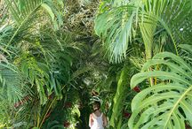 ARTFLOWER: RAIN FOREST / Get ideas on how to design a rain forest for your next event!