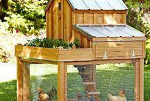 Tierhaltung Haus usw.