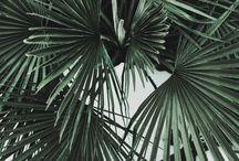 ♧ plants