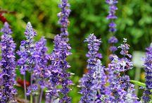 Herbs, flowers,...