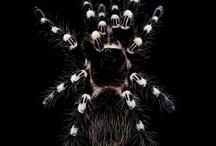 tarantula & scorpion
