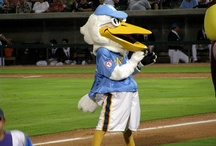 Myrtle Beach Pelicans / by MyMyrtleBeach