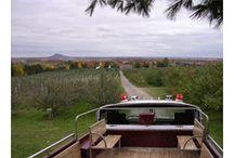 Verger Pomme Atout / Le Verger Pomme Atout offre un site exceptionnel à flanc de montagne. Le verger comprend plus de 8 000 pommiers, alors bonne cueillette !