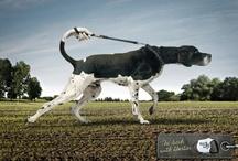 Ads_Print / by Mathieu Bourneuf