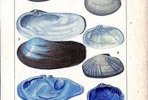 Ilustrações Antigas de História Natural