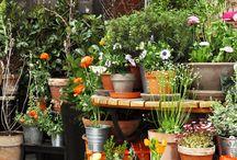GARDENS AND PLANTS arrangements by Pracownia Ładnie