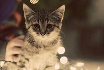 Christmas Things :3
