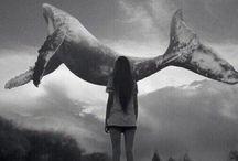 киты плывут вверх
