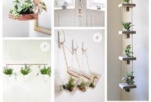 indoor garden, living pictures