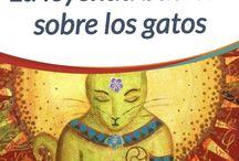 leyenda Budistasobre los gatos