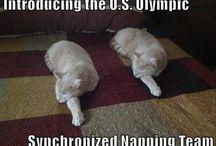 Cat craziness