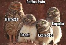 Night Owl!