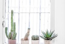 cacti in house