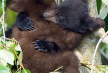 bearshugsarethebest