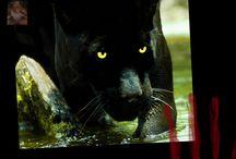 Amazing #Animals / Animals